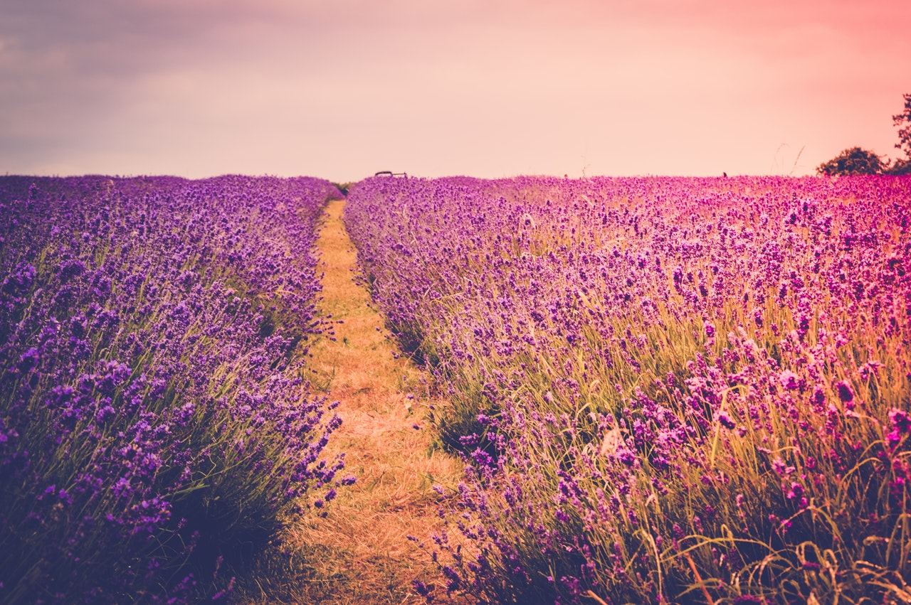 Self Empowering Sunday (10): The Color Purple